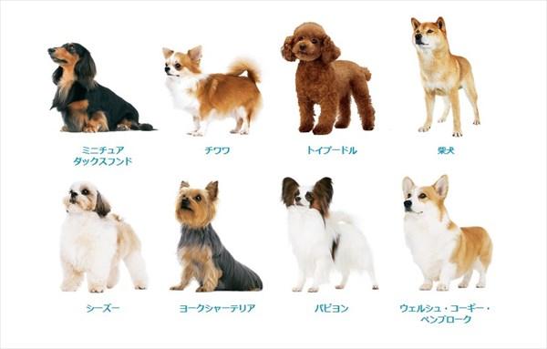 犬種別ラインナップ