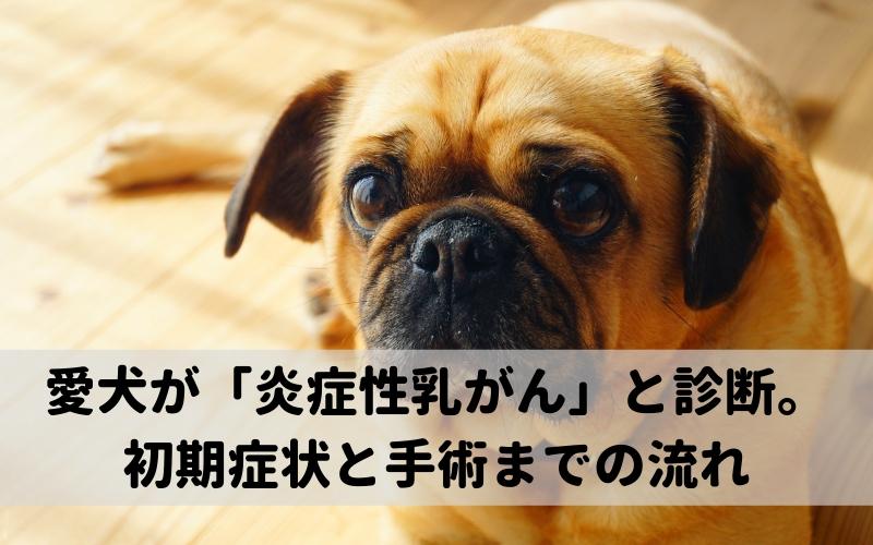 愛犬が炎症性乳がんと診断されて。初期症状と手術までの流れ