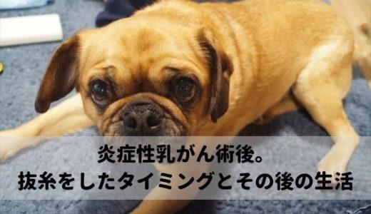 愛犬の炎症性乳がん、抜糸のタイミングとその後の過ごし方の様子