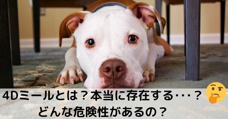 【ドッグフード】4Dミートとは?危険は嘘?不使用のドッグフードの選び方