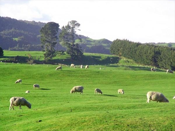 ニュージーランド産のグラスフェッドラム