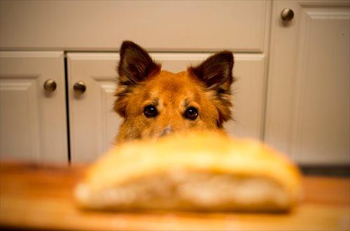 安全に犬に生肉を与える方法