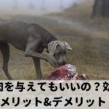 犬は生肉食が良い?与える生肉の種類は?注意点とメリット&デメリット